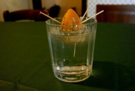 Посадка авокадо из косточки: советы