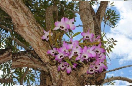 Орхидея в природных условиях