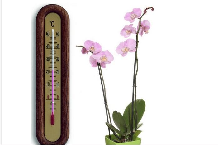Температурный режим