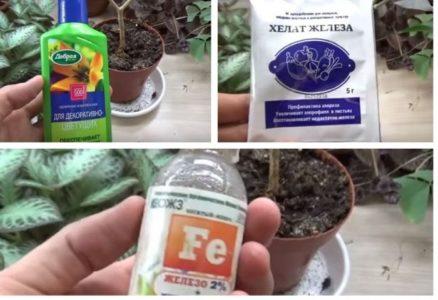 Удобрения для табернемонтаны