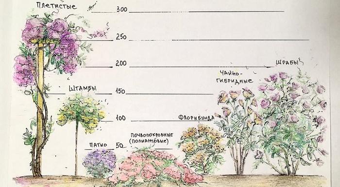 Разновидности и их характеристики