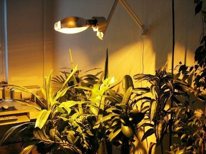 Фитолампа для подсветки