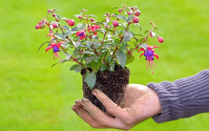 Оптимальные условия выращивания, особенности ухода