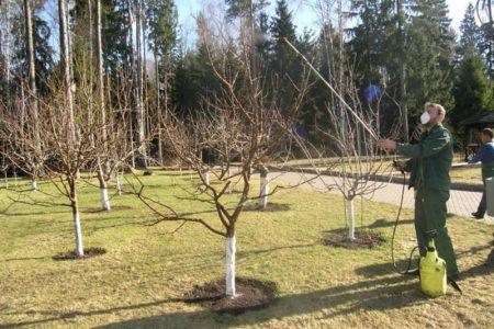 Обработка деревьев от болезней и вредителей